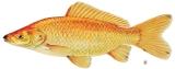 Pham and Her GoldFish