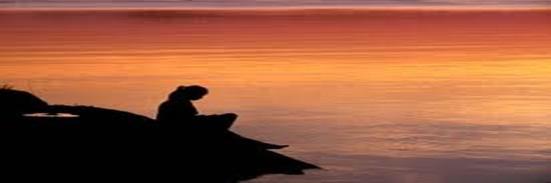 Image Source: Nubar.com