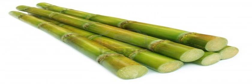 sugarcane-123rf